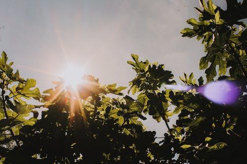 Kostnadsfri bild av balkar, botanik, botanisk, brillante