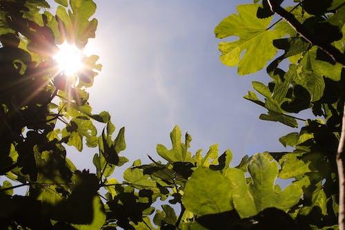 Kostnadsfri bild av dagsljus, grön, himmel, lågvinkelfoto