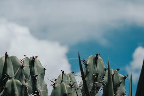 Immagine gratuita di cactus, cielo, colori, concentrarsi