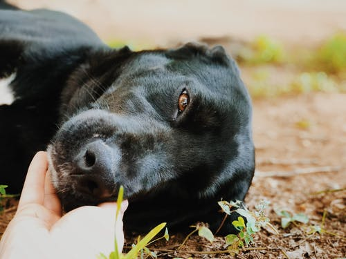 天性, 小狗, 最好的朋友 的 免費圖庫相片