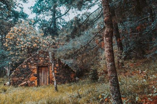 Безкоштовне стокове фото на тему «гілки дерев, гора, дім, дах»