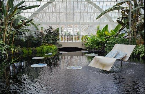 Free stock photo of abstract, art, botanical garden, botanical gardens