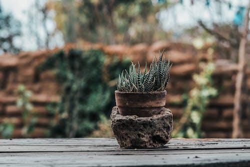 Gratis lagerfoto af gryde, makro, plante, potteplante