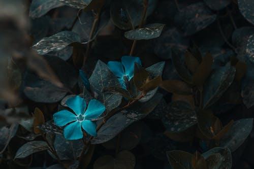 Foto d'estoc gratuïta de flor, florir, fulles, jardí