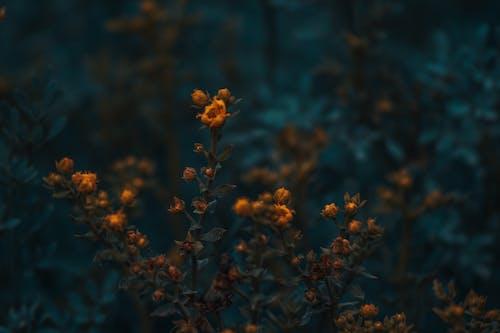 Immagine gratuita di ambiente, azzurro, blu, bocciolo