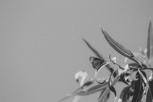 Greyscale Photography or a Butterfly in a Leaf Close-up Photography