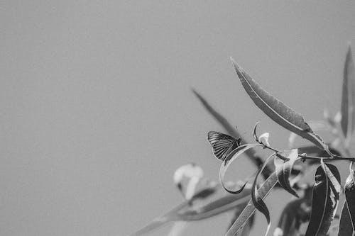Fotos de stock gratuitas de alas, animal, árbol, biología