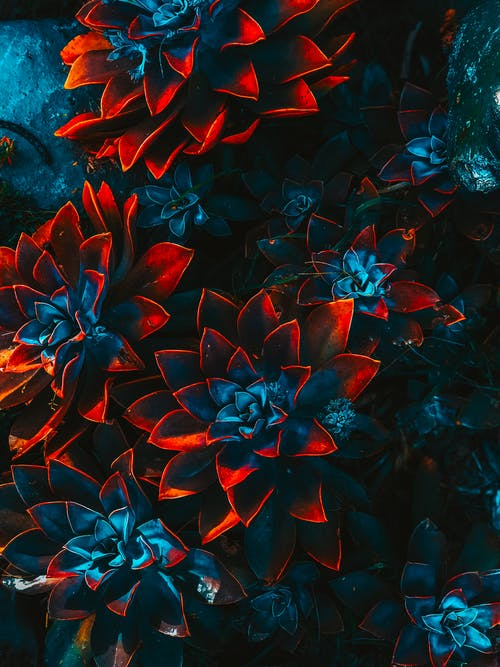 Blue-and-red Plants