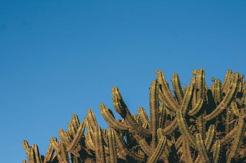 Gratis lagerfoto af flora, kaktusser, kraftværker, pigget