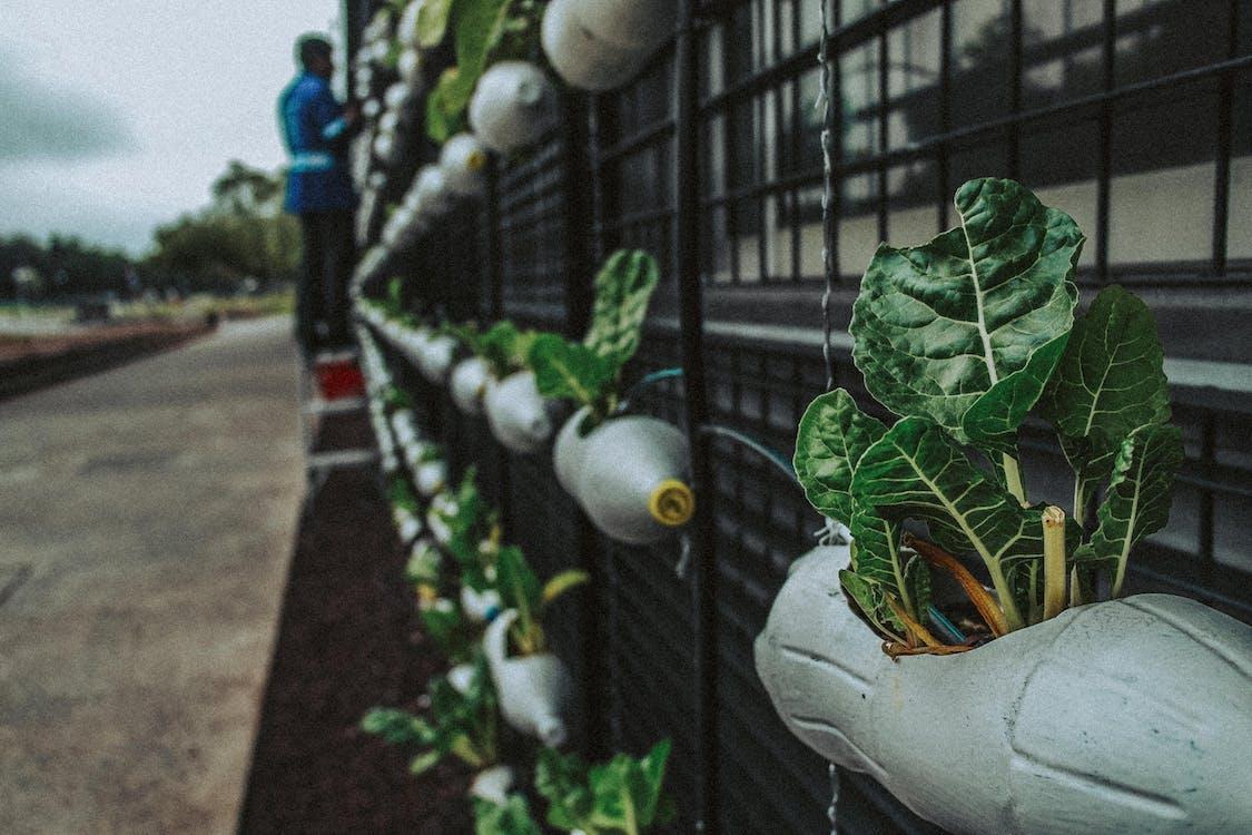 修剪花草, 回收, 園藝