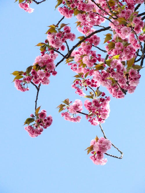 Low Angle View of Pink Flowers Against Blue Sky
