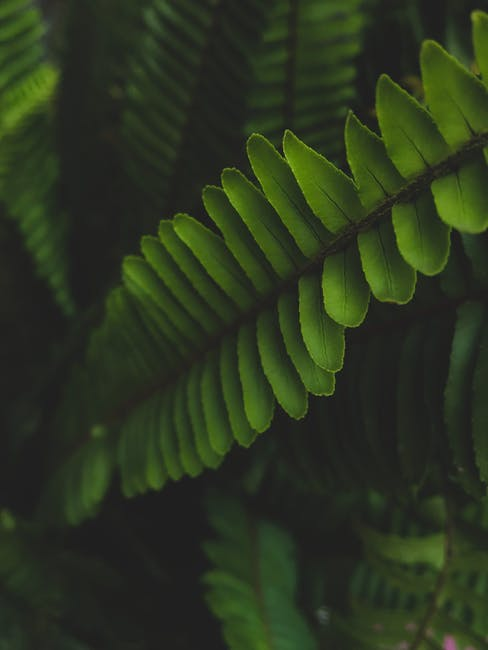 Green leafed plant photo