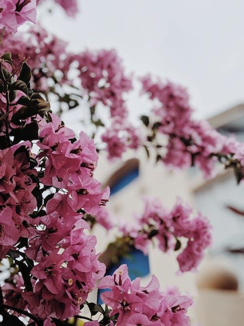 Photos gratuites de centrale, fleur, fleurir, fleurs