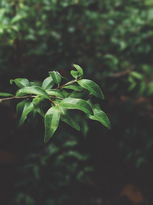 Immagine gratuita di albero, ambiente, colori, concentrarsi