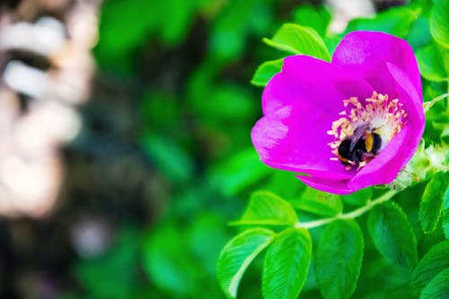 Free stock photo of bee, bees, close-up view, flora