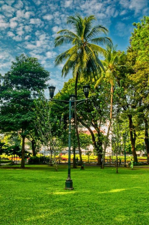 木, 街灯, 街灯柱の無料の写真素材