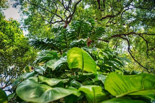 Ảnh lưu trữ miễn phí về cỏ, công viên, gỗ, hệ thực vật