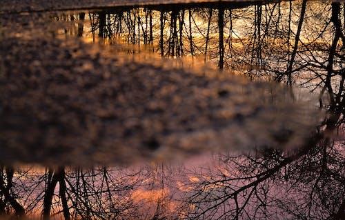 Gratis stockfoto met gouden uur, na de regen, reflecties