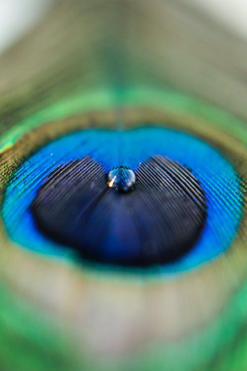 คลังภาพถ่ายฟรี ของ #micro, #morepichh, #photo, #photography