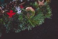 winter, blur, stars