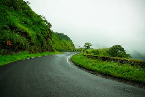 Foto stok gratis hari hujan, jalan pesisir, kayu hijau, latar belakang hijau