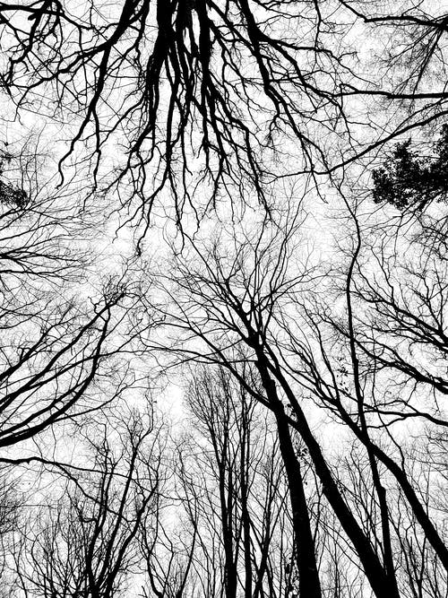 คลังภาพถ่ายฟรี ของ ก้าน, ขาวดำ, ต้นไม้, ธรรมชาติ