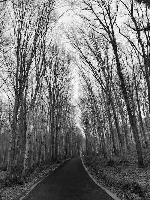 ağaçlar, bakış açısı, orman, perspektif içeren Ücretsiz stok fotoğraf