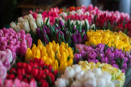 1000 beautiful spring flowers photos pexels free stock photos close up of multi colored tulips mightylinksfo