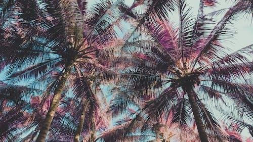 Základová fotografie zdarma na téma #palmy, cestování, infračervený, kokosové ořechy