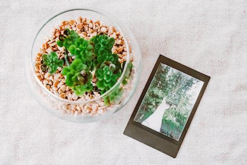 Foto d'estoc gratuïta de bol, cereal, créixer, de fusta