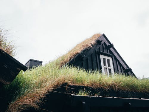 Green Grass on Roof
