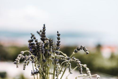 Безкоштовне стокове фото на тему «квіти, макрофотографія, пелюстки, сад»