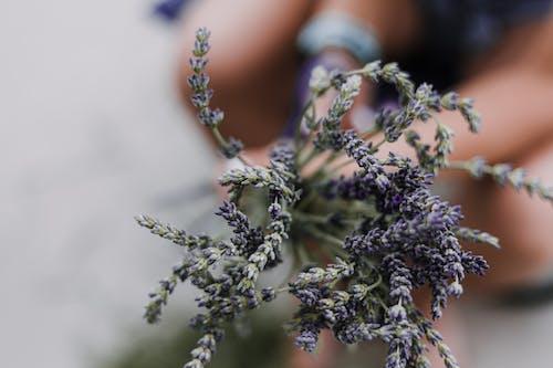 Foto profissional grátis de ao ar livre, borrão, delicado, flores