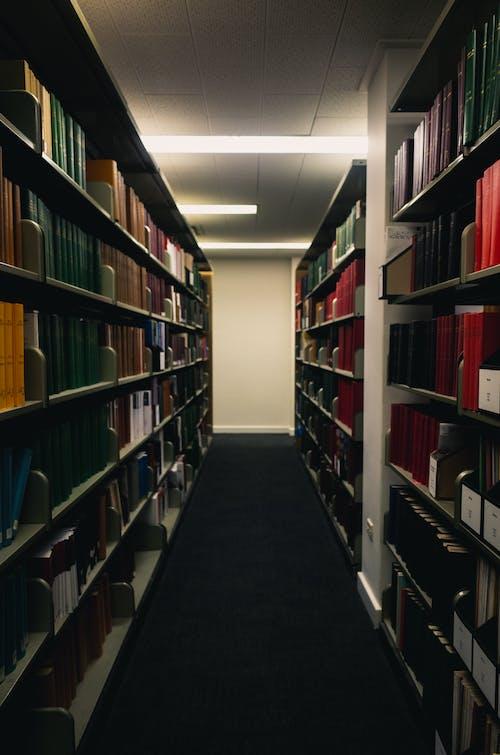 도서관, 서적, 책꽂이, 책장의 무료 스톡 사진