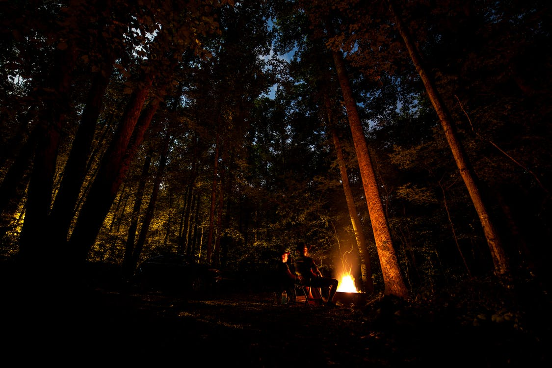 Photo of People Camping in Forest