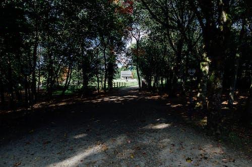 คลังภาพถ่ายฟรี ของ กลางแจ้ง, คำแนะนำ, ต้นไม้, ทางเดินที่ไม่ปูกระเบื้อง
