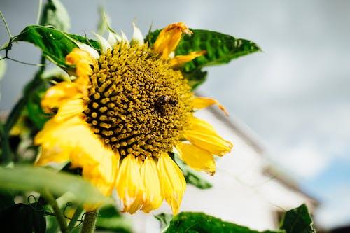 Gratis arkivbilde med bie, blomst, dybdeskarphet, flora