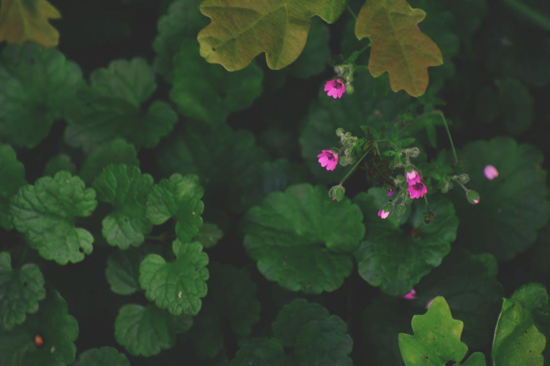 açık hava, bitki örtüsü, bitkiler