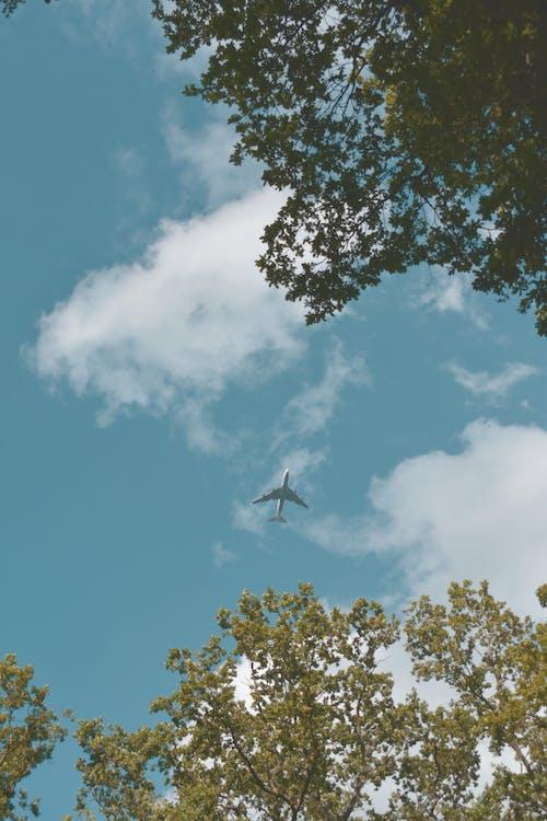 Gratis stockfoto met aviate, bladeren, bomen, buiten
