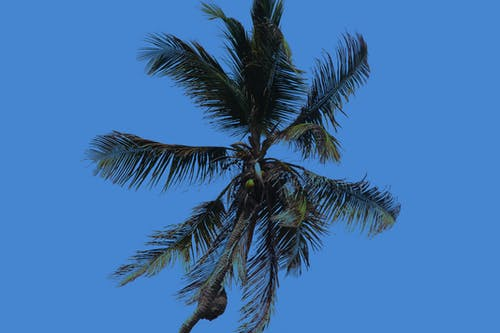 加勒比, 拉丁美洲, 海, 海岸線 的 免費圖庫相片