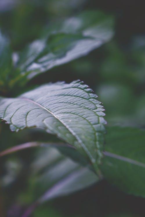 Darmowe zdjęcie z galerii z selektywna ostrość, zbliżenie, zielone liście, zielony