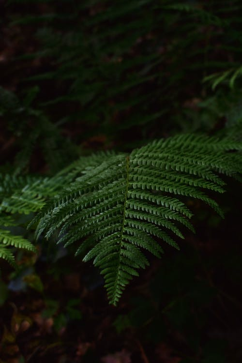 Selective Focus Close-up Photo of Green Fern Plants