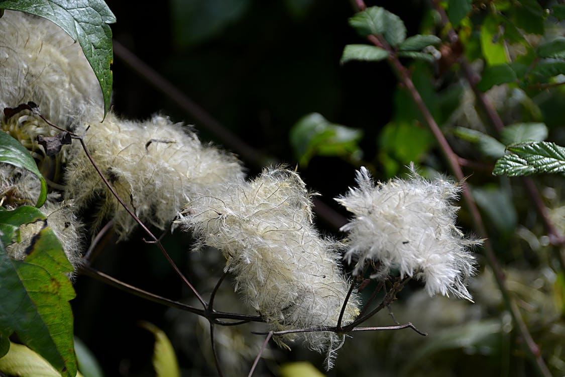 blanc, la nature, plantes