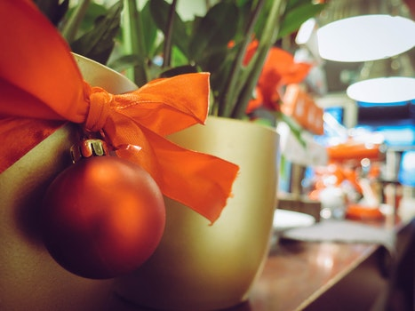Close-up of Christmas Plant