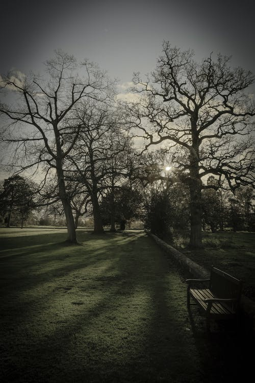 Kostenloses Stock Foto zu bank, bäume, england, gruselige bäume