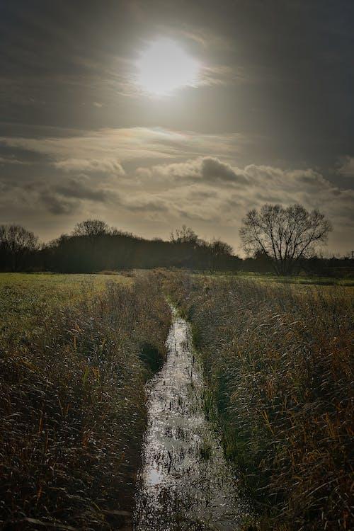 Photos gratuites de bord de rivière, champs, marigot