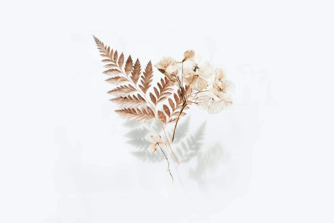 Brown Fern Leaves
