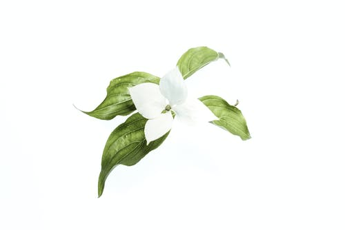 Бесплатное стоковое фото с белый, зеленый, Искусство, красивый