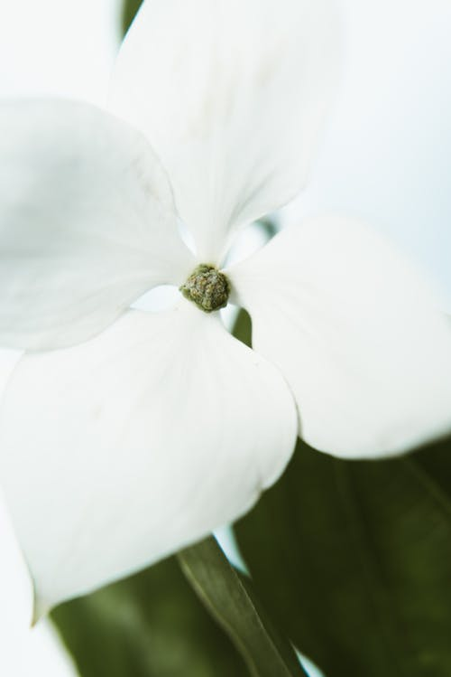 Close-up Photo of White-petaled Flower