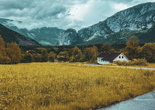 Foto profissional grátis de aldeia, beleza na natureza, casa de madeira, cores do outono
